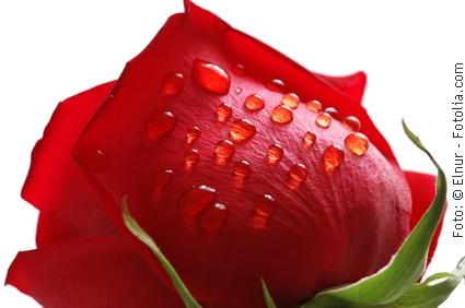 Arrangements für Verliebte und Valentine