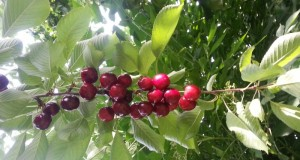 Workshop Obstbaumschnitt